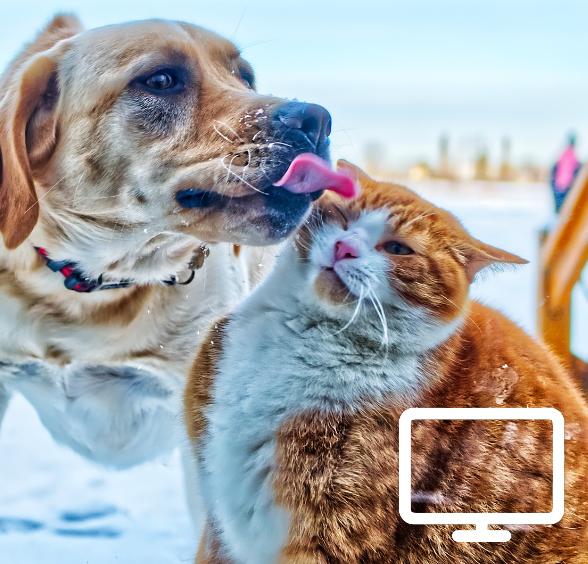Formation en ligne communication animale