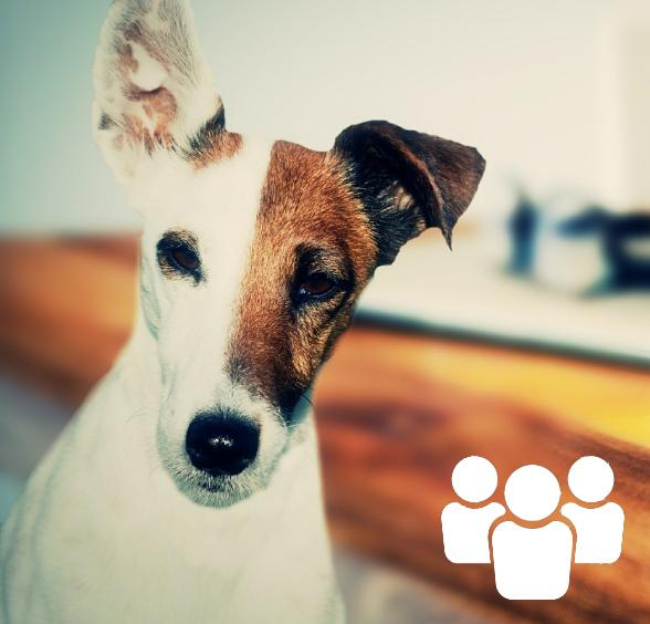 Formation présentielle communication animale